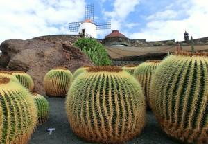 zwiedzanie lanzarote Ogród kaktusów
